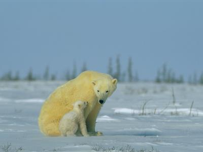 A Female Polar Bear Looks Affectionately Toward Her Cub-Norbert Rosing-Photographic Print