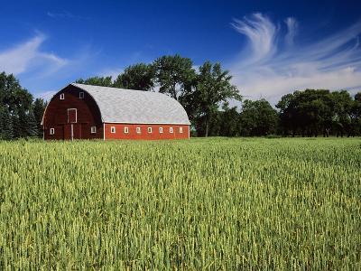 A Field of Wheat and Barn, Myrtle, Manitoba, Canada-Mike Grandmaison-Photographic Print