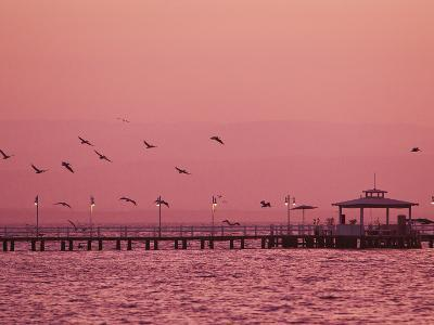 A Flock of Birds Fly around a Fishing Pier During a Pink Sunset-Mike Theiss-Photographic Print