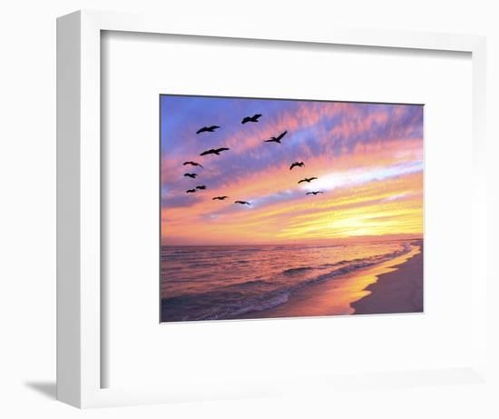 A Flock of Brown Pelicans Fly over the Beach as the Sun Sets-Steve Bower-Framed Photographic Print
