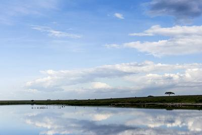 https://imgc.artprintimages.com/img/print/a-flock-of-lesser-flamingo-in-the-distance-reflected-in-the-surface-of-a-calm-waterhole_u-l-pokc520.jpg?p=0