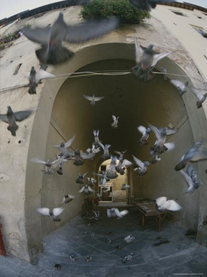 A Flock of Pigeons Fly out of an Arched Passageway in Siena, Italy-Raul Touzon-Photographic Print