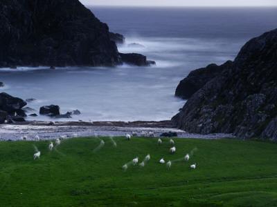 https://imgc.artprintimages.com/img/print/a-flock-of-sheep-graze-on-seaweed-on-iona-s-beach_u-l-pc8mr60.jpg?p=0