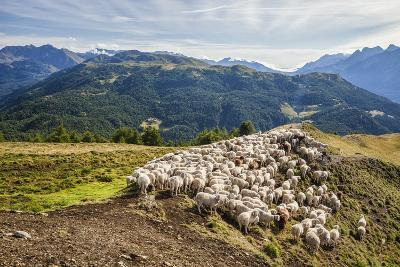 A Flock of Sheep in the Pastures of Mount Padrio, Orobie Alps, Valtellina, Lombardy, Italy, Europe-Roberto Moiola-Photographic Print