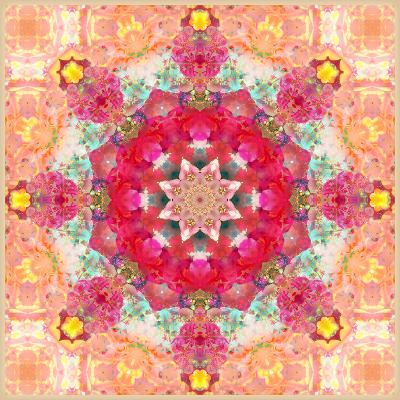 A Floral Montage, Layer Work from Pink and Red Poeny Blossoms and Pink Cherry Blossoms-Alaya Gadeh-Photographic Print