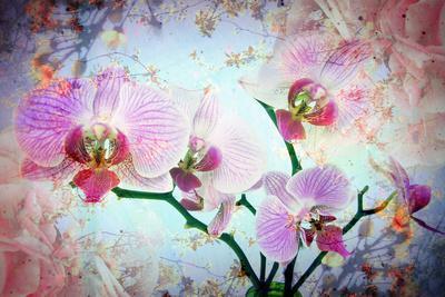 https://imgc.artprintimages.com/img/print/a-floral-montage_u-l-q11v6mz0.jpg?p=0