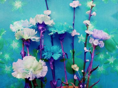 A Floral Montage-Alaya Gadeh-Photographic Print