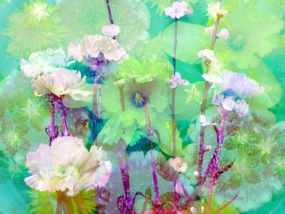 https://imgc.artprintimages.com/img/print/a-floral-montage_u-l-q11yowr0.jpg?p=0