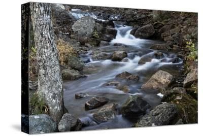 A Flowing River in Acadia National Park, Maine-Mauricio Handler-Stretched Canvas Print