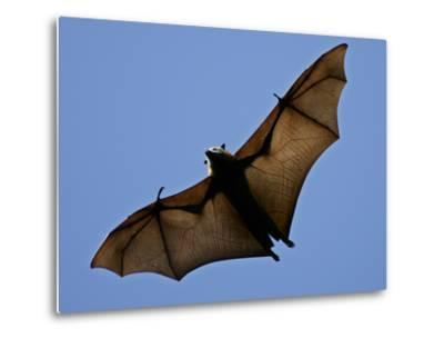 A Flying Fox Soars Above the Trees