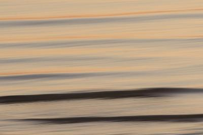 A Flying Gull over the Lake Near Antelope Island State Park, Utah-Philip Schermeister-Photographic Print
