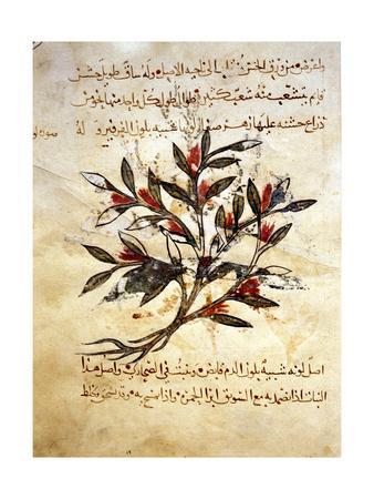 https://imgc.artprintimages.com/img/print/a-folio-from-the-arabic-version-of-dioscorides-de-materia-medica_u-l-pm58tp0.jpg?p=0