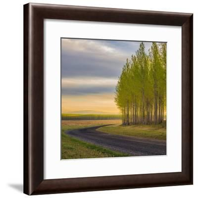 A Forest And A Road Square-Jason Matias-Framed Giclee Print