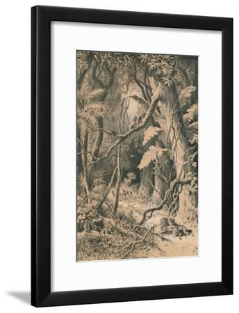 A Forest in Central Africa, c1880--Framed Giclee Print