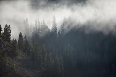 A Forest in Montana-Cory Richards-Photographic Print