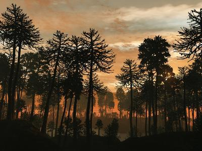 A Forest of Cordaites and Araucaria Silhouetted Against a Colorful Sunset-Stocktrek Images-Photographic Print