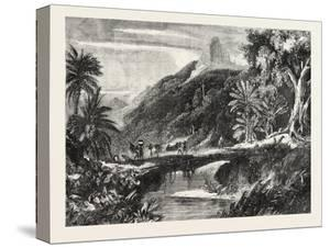 A Forest Scene in Madagascar, 1865