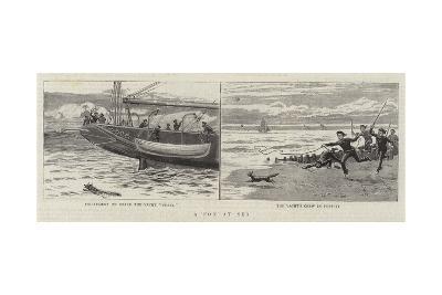 A Fox at Sea--Giclee Print