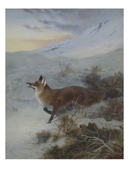 A Fox in a Winter Landscape-Archibald Thorburn-Giclee Print