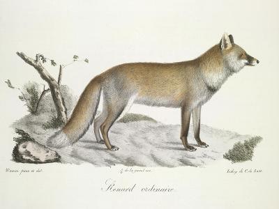 A Fox-Werner-Giclee Print