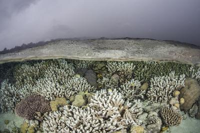 A Fragile Coral Reef Grows in Shallow Water in the Solomon Islands-Stocktrek Images-Photographic Print