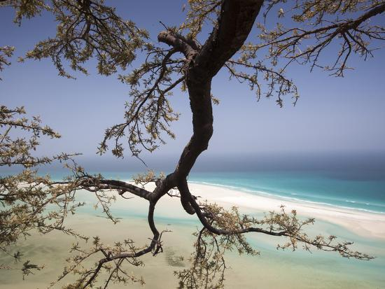 A Frankincense Tree Anchors Itself On The Cliffs Photographic