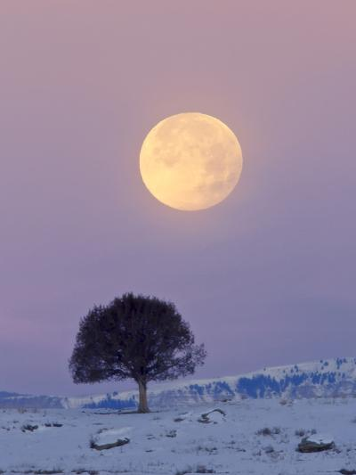 A Full Moon Rising over a Single Tree on a Snowy Hill-Robbie George-Photographic Print