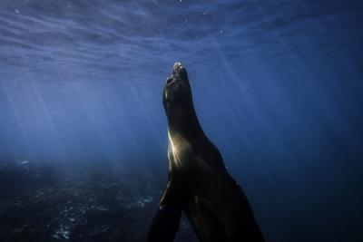 https://imgc.artprintimages.com/img/print/a-galapagos-sea-lion-pup-playing-underwater_u-l-q12wr4b0.jpg?p=0