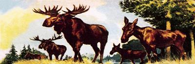 A Gang of Elks-English School-Giclee Print
