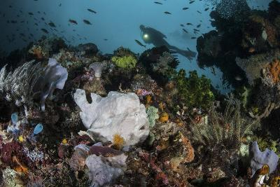 A Giant Frogfish Blends into its Reef Surroundings in Indonesia-Stocktrek Images-Photographic Print