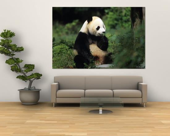 A Giant Panda Smelling a Flower, National Zoo, Washington D.C.-Taylor S^ Kennedy-Wall Mural