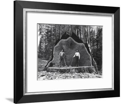 A Giant Sequoia Felled by Loggers in the Early 1900's-National Park Service-Framed Photographic Print