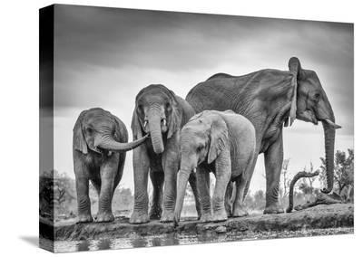 A Giant Unity-Jaco Marx-Stretched Canvas Print