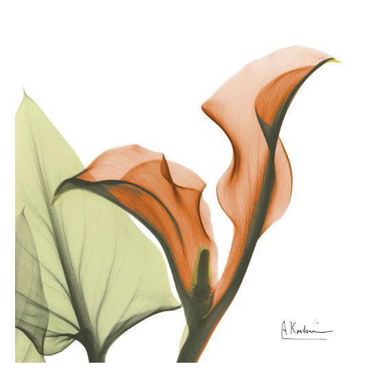 A Gift of Calla Lilies in Orange-Albert Koetsier-Art Print