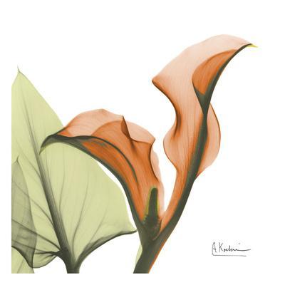 https://imgc.artprintimages.com/img/print/a-gift-of-calla-lilies-in-orange_u-l-f547sl0.jpg?p=0