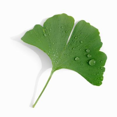 A Ginkgo Leaf with Drops of Water-Alexander Feig-Photographic Print