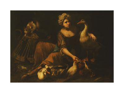 A Girl Feeding Cockerels, with a Cat on a Basket, a Goose, Duck and other Birds-called Mao		 Salini Tommaso-Giclee Print