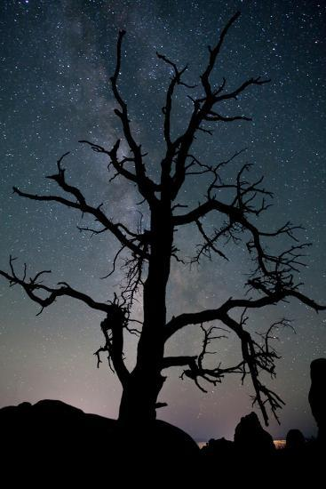 A Gnarly Tree in Silhouette Against the Milky Way in Arches National Park-Dmitri Alexander-Photographic Print
