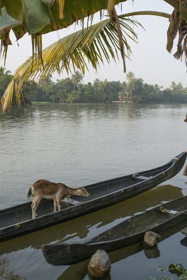 A Goat Waits on a Canoe Until its Owner Returns-Kelley Miller-Photographic Print