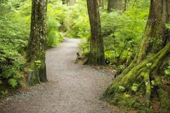 A Graveled Path Through the Woods of the Temperate Rainforest in Sitka, Alaska-Jonathan Kingston-Photographic Print