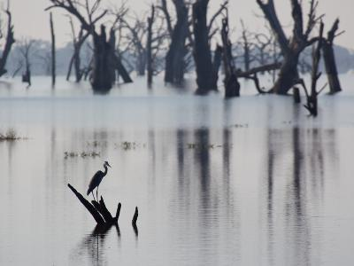 A Gray Heron, Ardea Cinerea, Rests on a Dead Tree in a Lake-Alex Saberi-Photographic Print