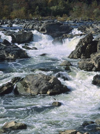 A Great Blue Heron Fishing from the Rocks at Great Falls-Bates Littlehales-Photographic Print