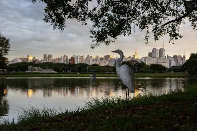 A Great Egret Looks Out over a Lake in Sao Paulo's Ibirapuera Park-Alex Saberi-Photographic Print