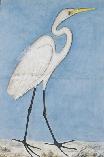 A Great Egret, Lucknow, C.1790--Giclee Print