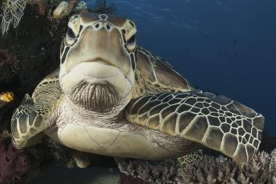 A Green Turtle Resting on a Reef Top in Komodo National Park, Indonesia-Stocktrek Images-Photographic Print