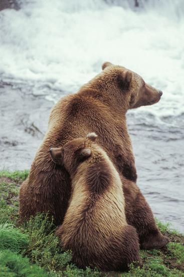 A Grizzly Bear Cub Nuzzles its Mother by a Waterfall-Tom Murphy-Photographic Print