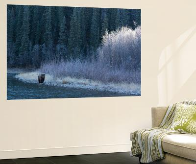 A Grizzly Bear Fishes at the Fishing Branch River-Cristina Mittermeier-Wall Mural