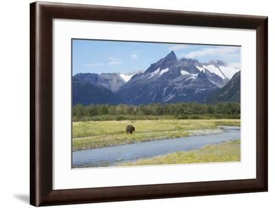 A Grizzly Bear, Ursus Arctos, Walking Along a River in a Mountain Valley-Bob Smith-Framed Photographic Print