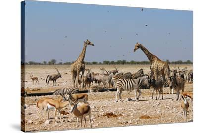 A Group of Animals at the Watering Hole, Giraffe, Springbok, Gemsbok and Zebra-Anne Keiser-Stretched Canvas Print