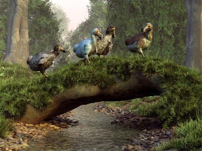 A Group of Dodo Birds Crossing a Natural Bridge Over a Stream-Stocktrek Images-Photographic Print